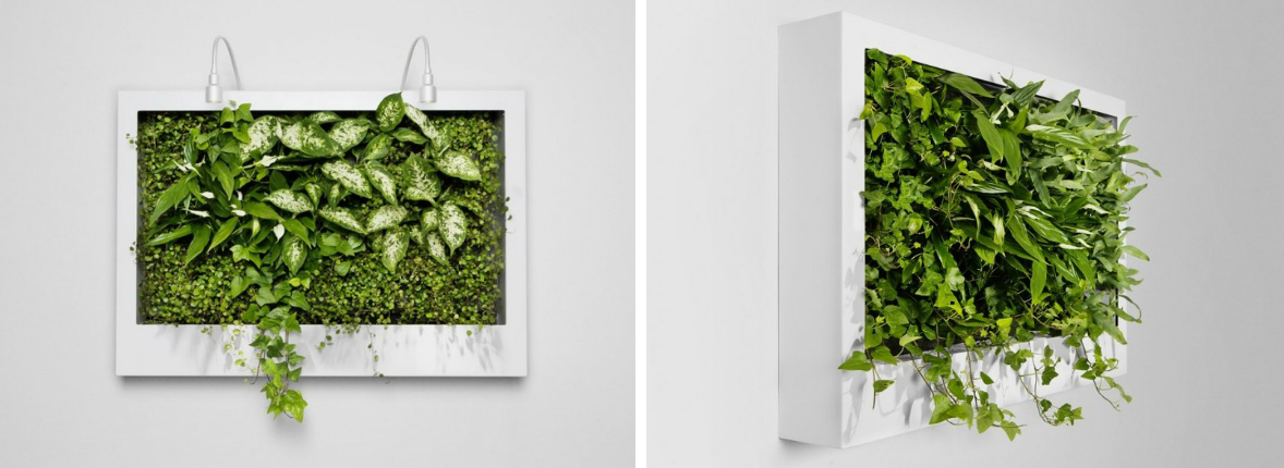 zeleni-zid-green-centar-1